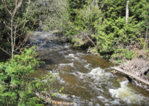 Fast flowing headwaters of the Mad River in Ontario's Nottawasaga Valley. Photo credit: NVCA