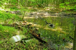 Garbage_in_pond_Lake_Simcoe_RegionCA_